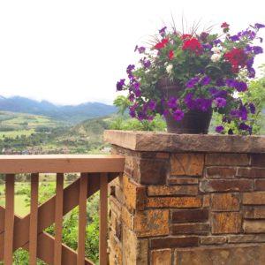 2016 8 15 Mountain flowers